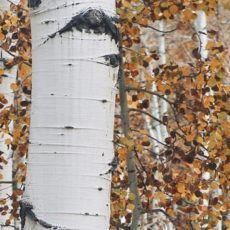 Colorado Autumn Tree & Plant Care
