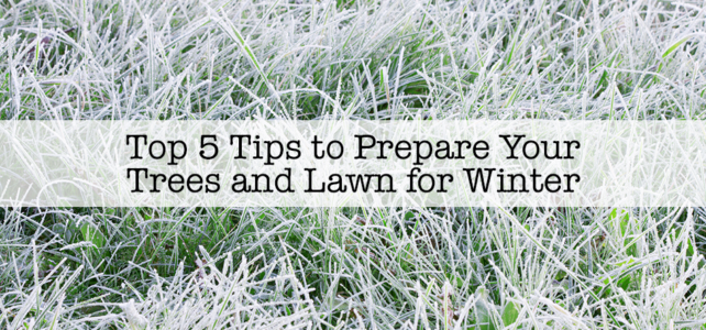 Top 5 Tips to Prepare Your Trees and Lawn for Winter
