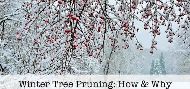 Winter Tree Pruning: How & Why