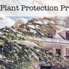 Winter Plant Protection Programs