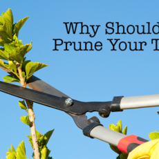 Why Should You Prune Your Trees?