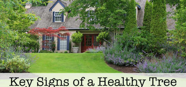 Key Signs of a Healthy Tree