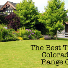 The Best Trees for Colorado Front Range Gardens